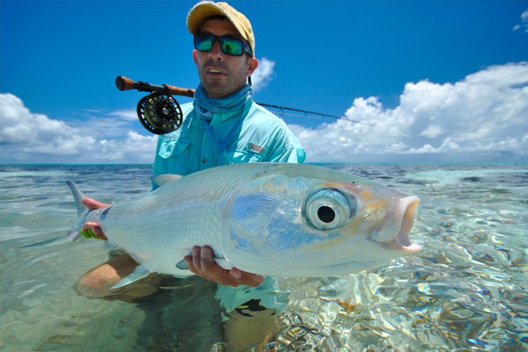 Large Milkfish in the seychelles