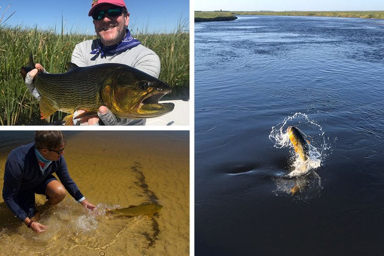 3 Great Fish From Pira Lodge