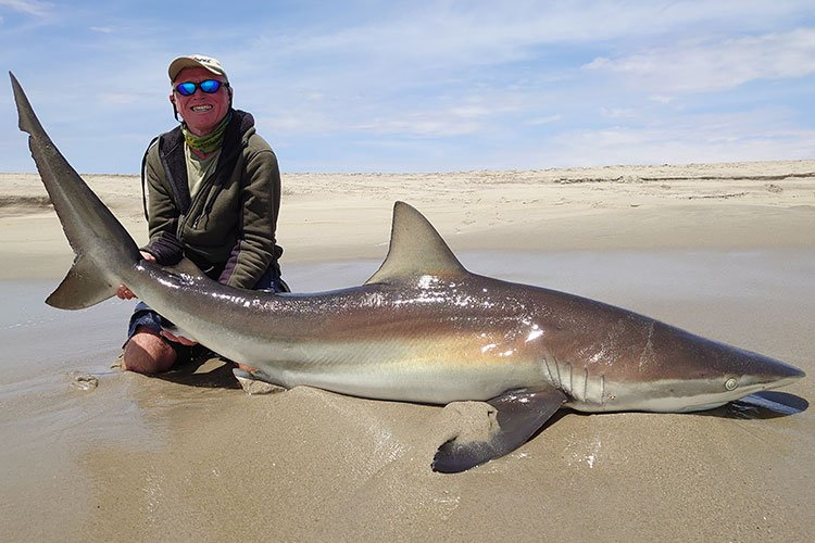 A large shark on the beach