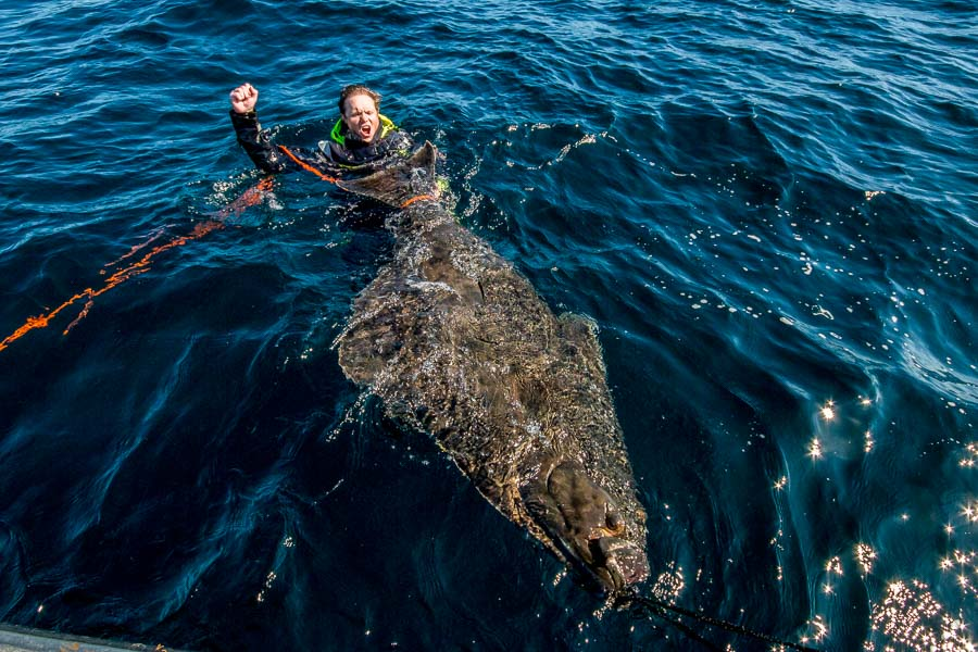 World record halibut caught at competition