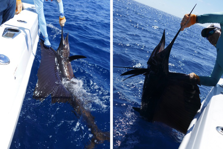 A large sailfish beside the boat