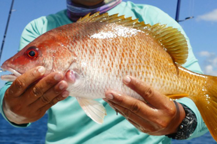 Orange Snapper fish