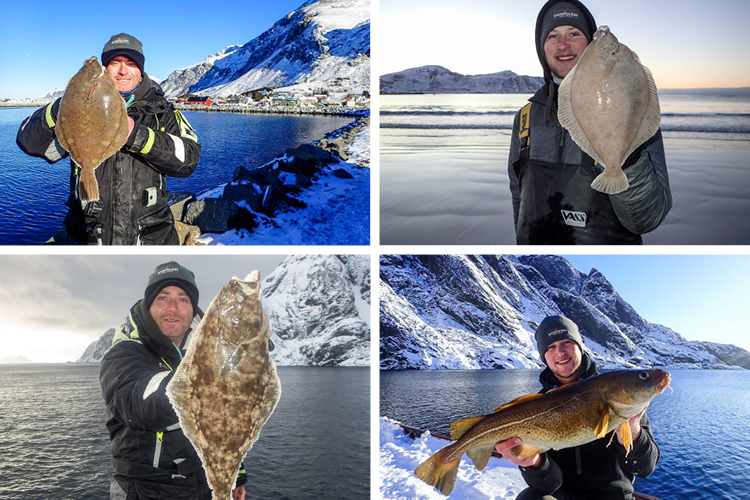 4 Great fish from the Lofoten Islands