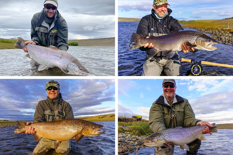 $ great Sea trout landed in Argentina