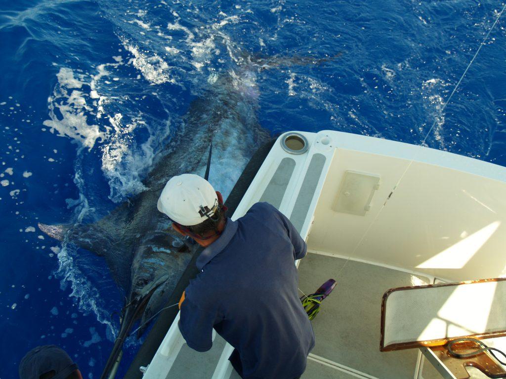 Best big game marlin fishing