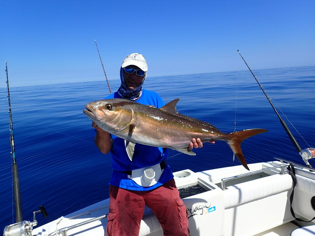 amberjack best game fishing in the world