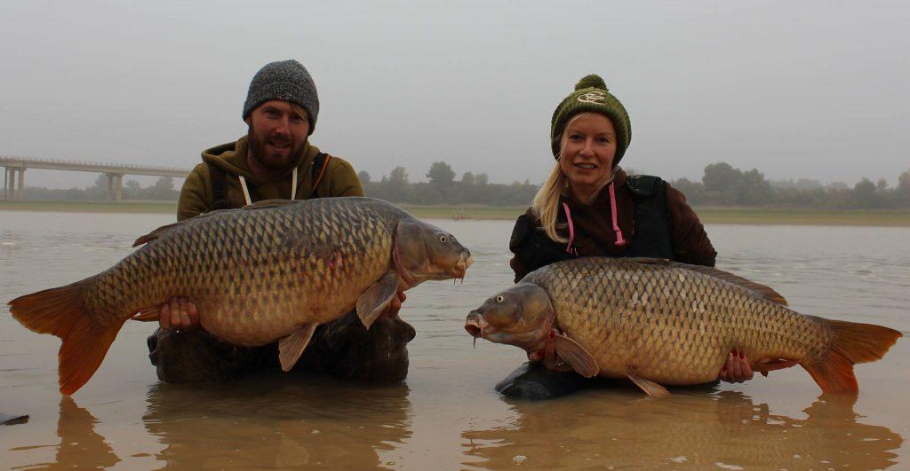 Pair of common carp