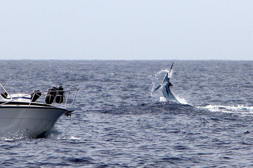 best blue marlin fishing