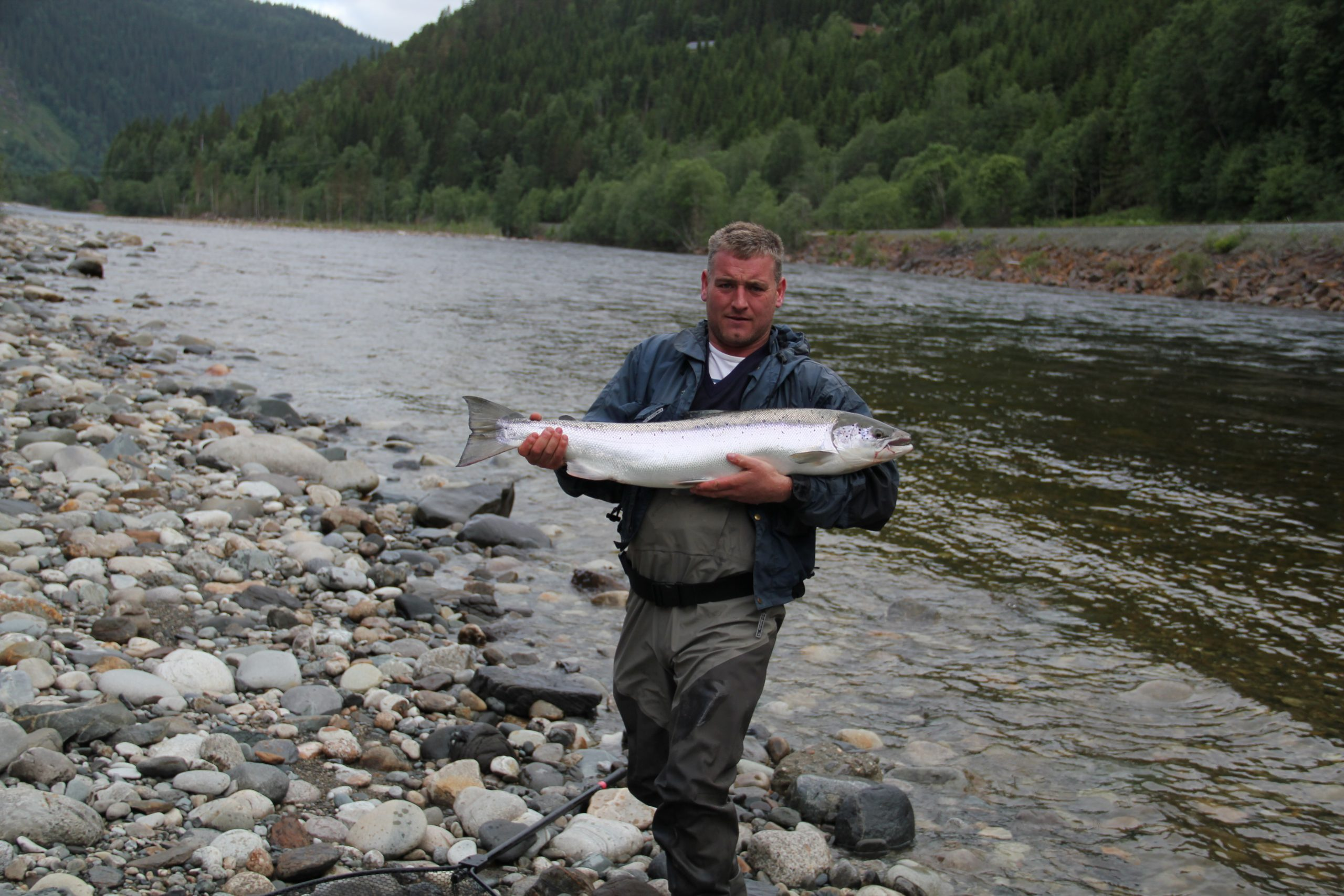 big and healthy salmon