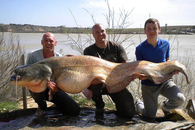 Wels catfish river ebro