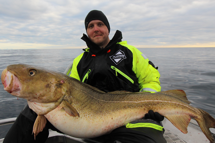 Large cod before catch and release